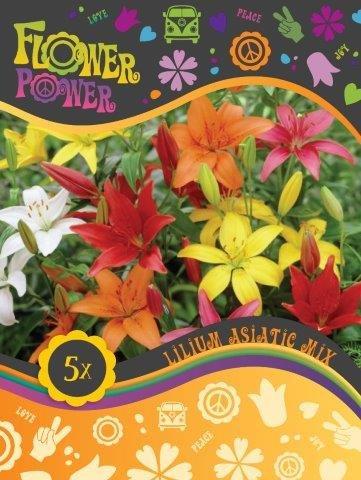 Flower Power Lilium Asiatic mix 5 løg