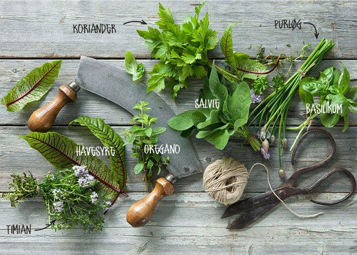 Danske krydderurter med navne