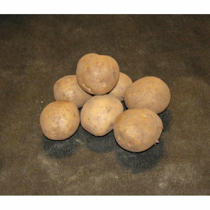 Middeltidlig Læggekartoffel Gala
