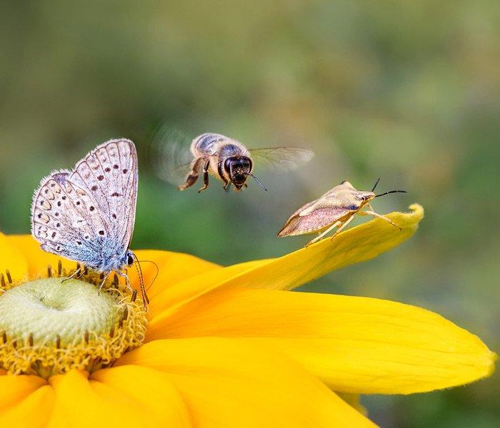 Insekter på blomst