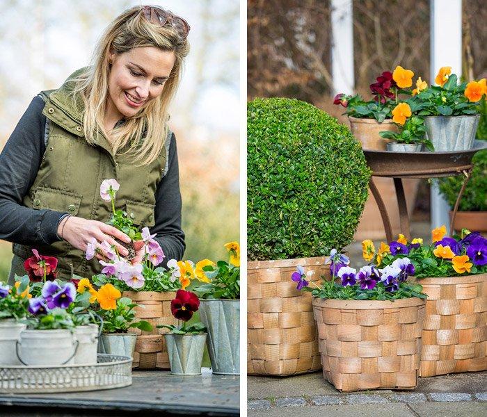 Kvinde planter forårsblomster i krukker