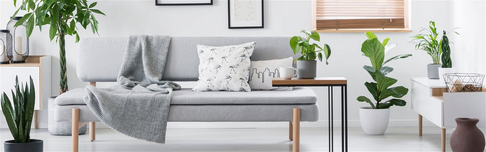 Stue med mange stueplanter