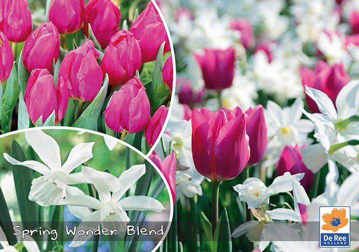 Spring Wonder Blend - Tulipaner og Narcisser -  pink og hvid - Landscape 25 løg