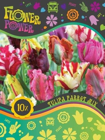 Flower Power Tulipanløg Parrot mix 12 løg