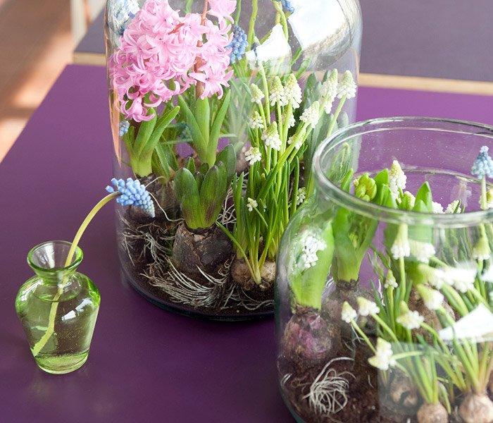 Løgplanter i vaser