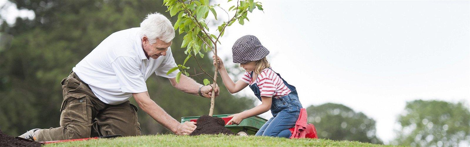 Senior mand og barn planter et træ