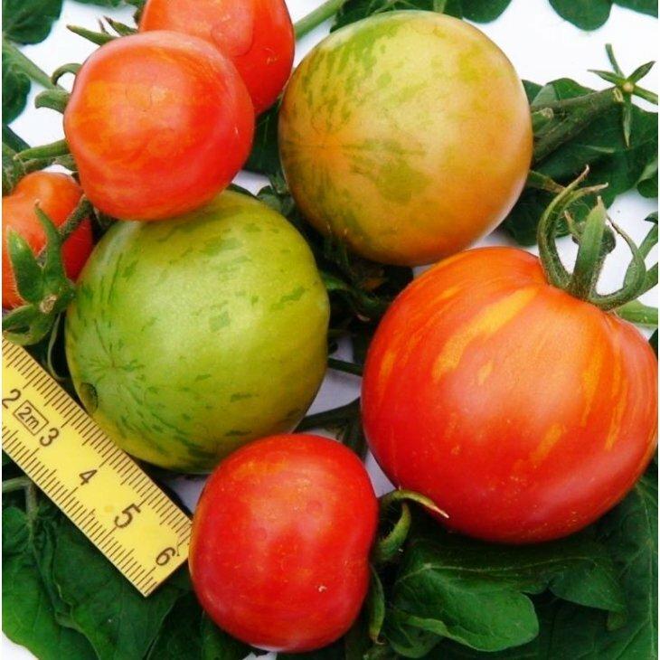 Almindelig tomat Tigerella