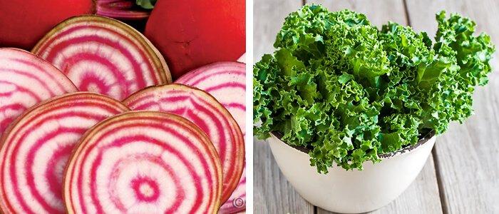 Bolsjestribede-rødbeder-og-grønkål