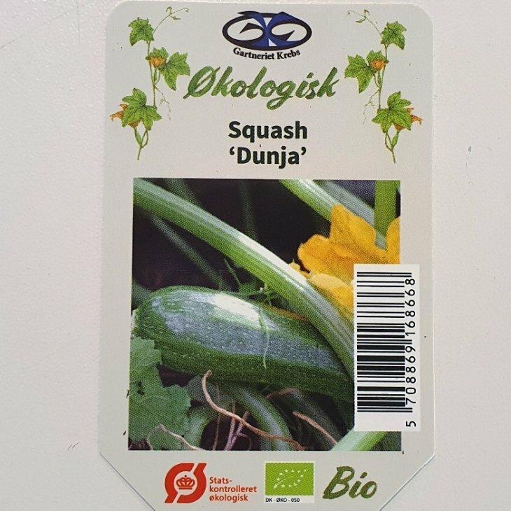 Squash Dunja