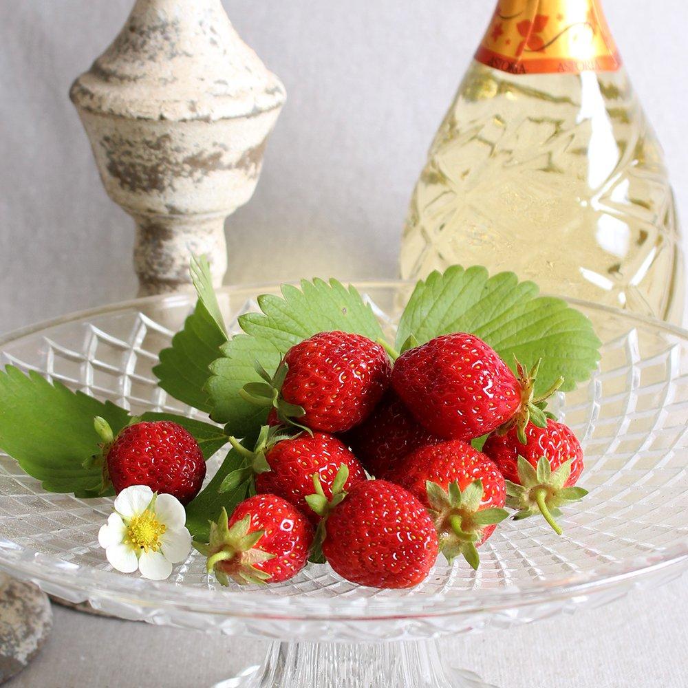 Jordbærplanter - Fragaria 'Korona' i 9 cm potte