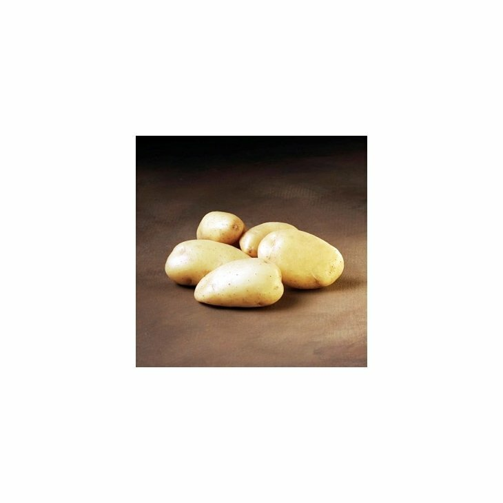 Sen Læggekartoffel Bintje