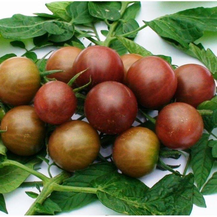 Cherrytomat Black Cherry