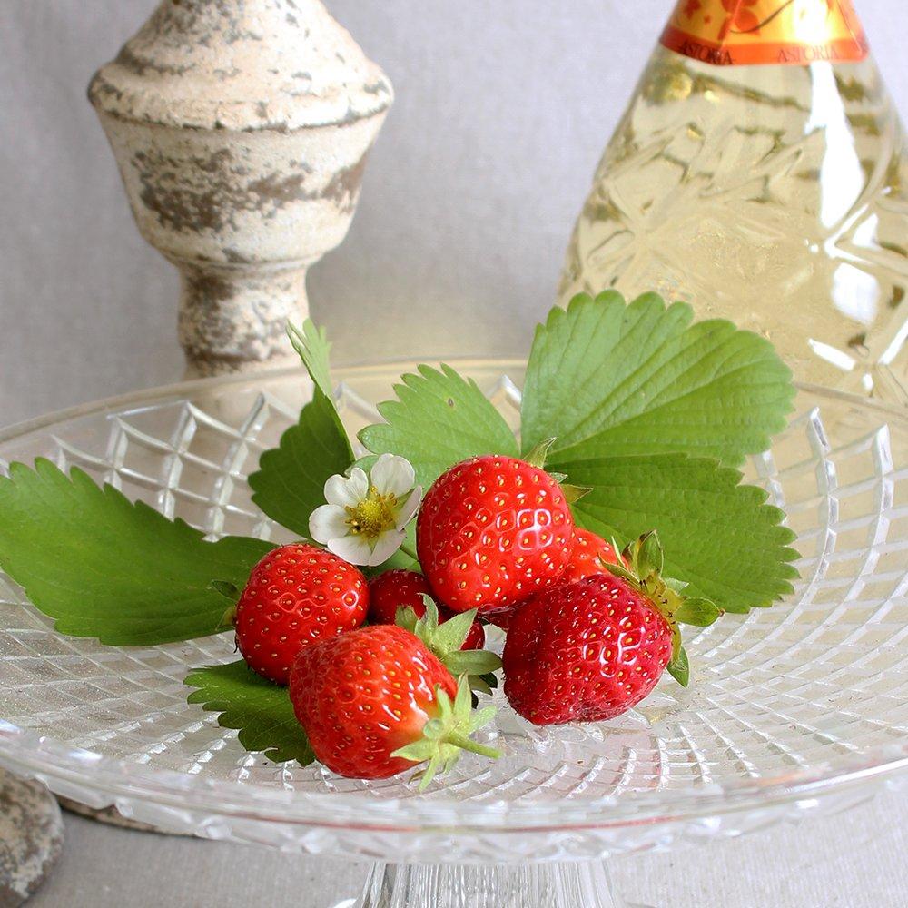 Jordbærplanter - Fragaria 'Salsa' i 9 cm potte