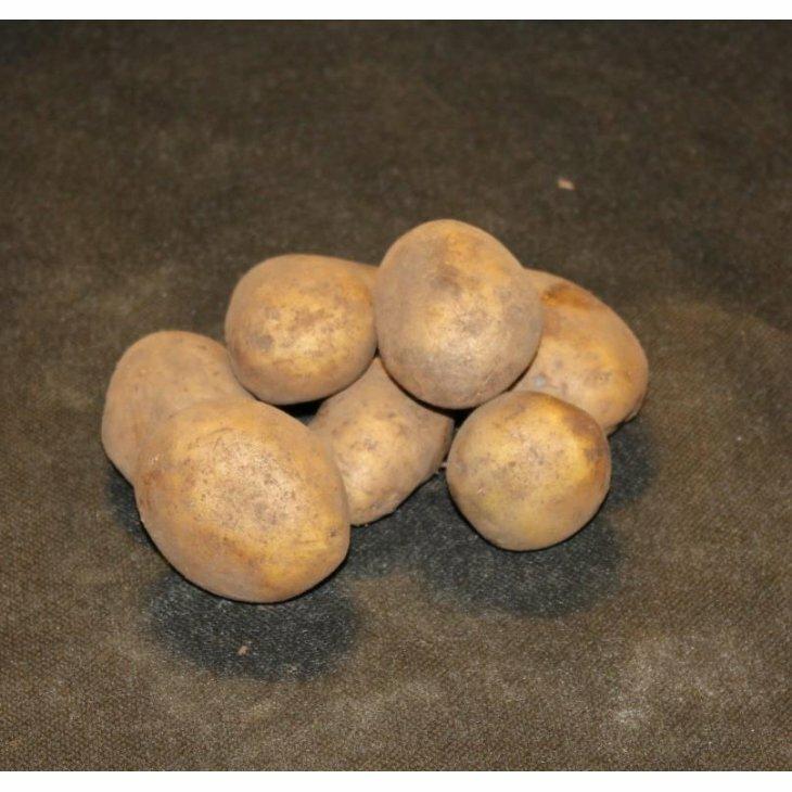Sen Læggekartoffel Jutlandia