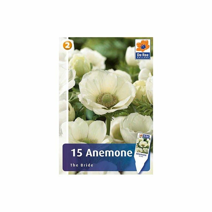 ANEMONE THE BRIDE - Franske anemoner
