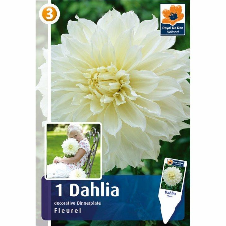 DAHLIA FLEUREL  (Blomsterløg)