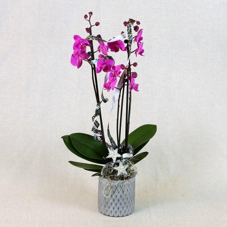 Nytårsdekoreret Orkide dekoration lilla