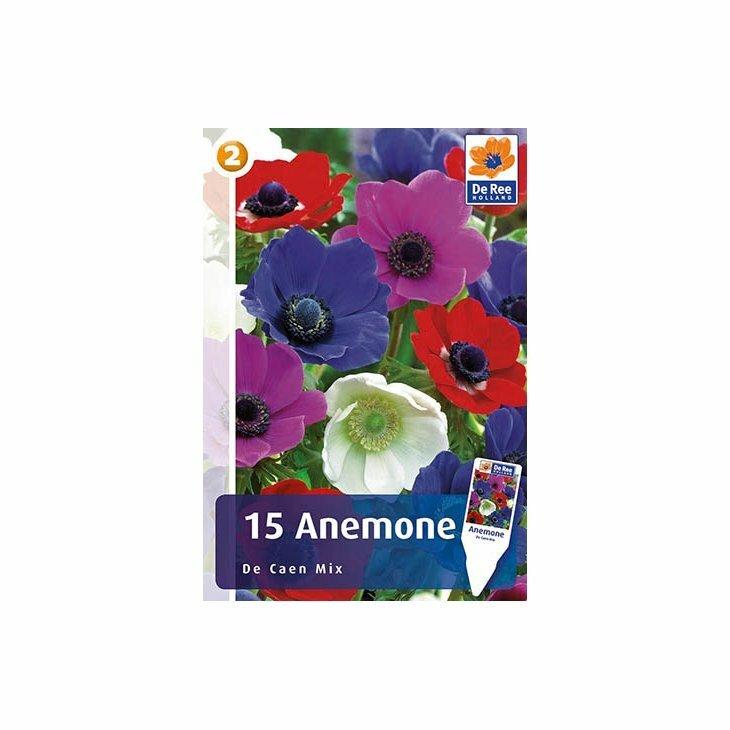 ANEMONE 'DE CAEN MIXTURE - Franske anemoner