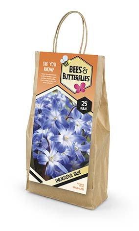Bees & Butterflies Chionodoxa Blue - Snepryd 25 løg