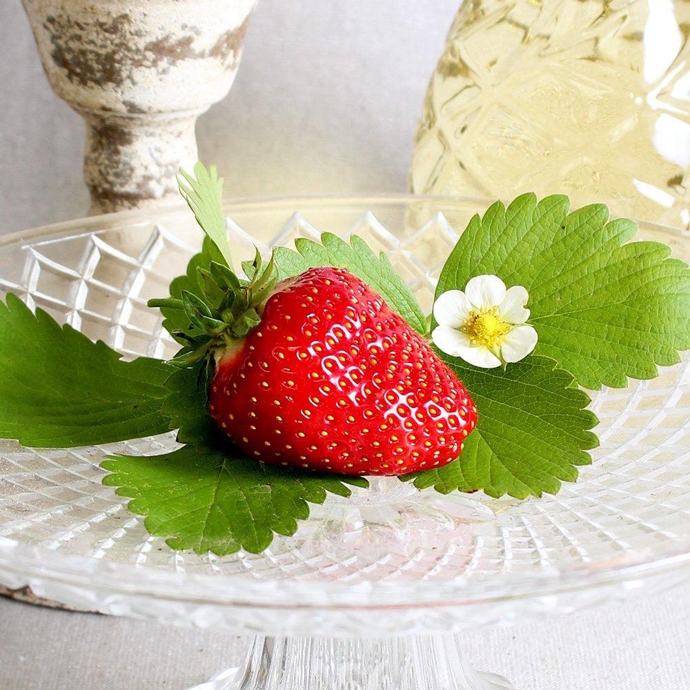 Jordbærplanter - Fragaria 'Sweet Colossus' i 13 cm potte