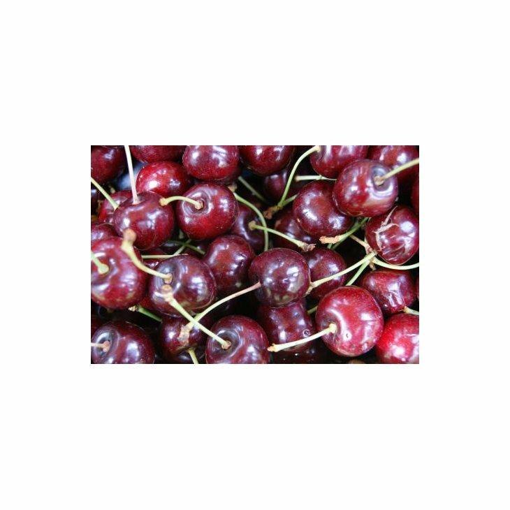 Sødkirsebærtræ Lapins