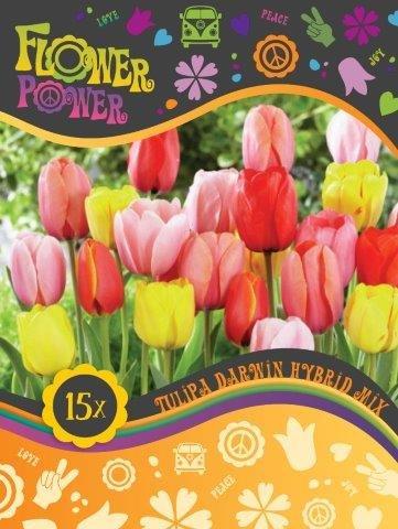 Flower Power Tulipanløg Darwin hybrid mix 12 løg