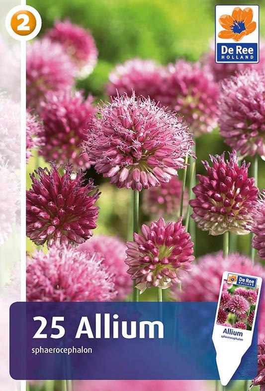 Master Allium sphaerocephalon - Prydløg 25 løg