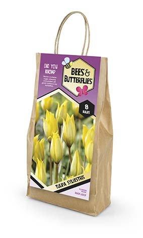 Bees & Butterflies Tulipa Sylvestris - Skovtulipan 8 løg