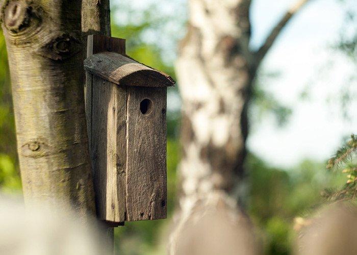 Fuglehus i træ