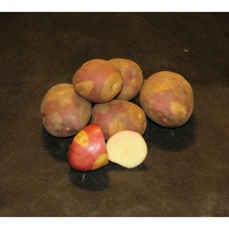 Middeltidlig Læggekartoffel Celebration