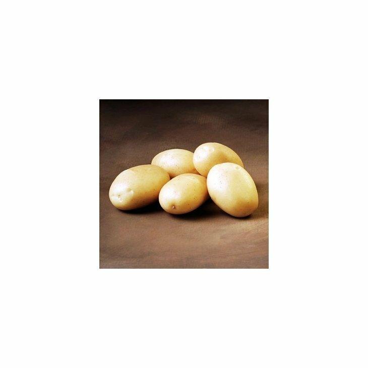 Sen Læggekartoffel Sava
