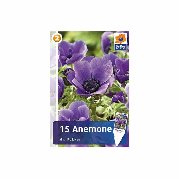 ANEMONE MR. FOKKER - Franske anemoner