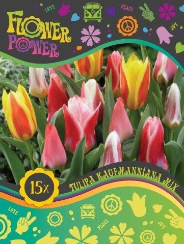 Flower Power Tulipanløg Kaufmanniana mix 12 løg