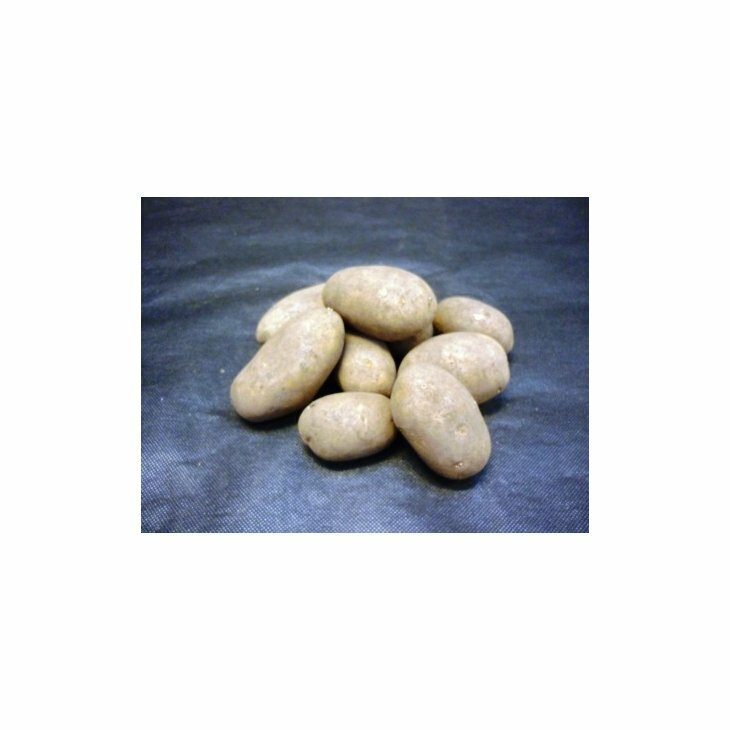Middeltidlig Læggekartoffel Ditta