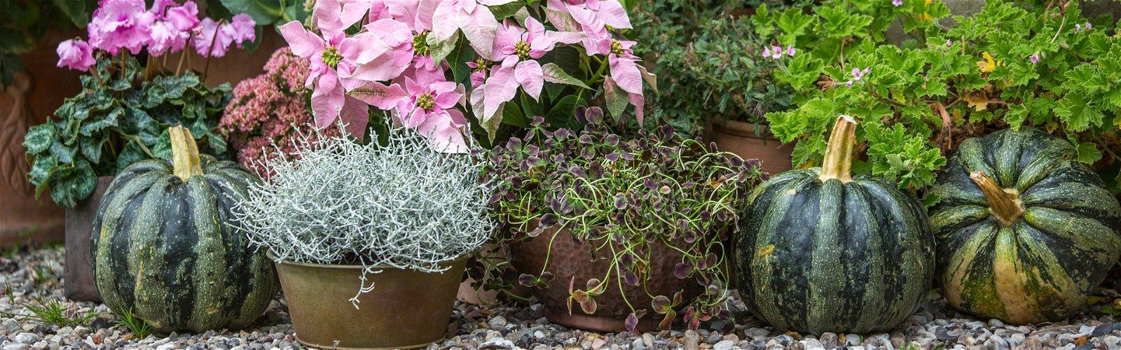 Forskellige sensommerplanter