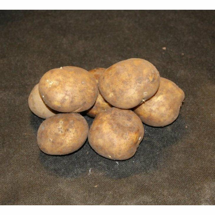 Sen Læggekartoffel Royal