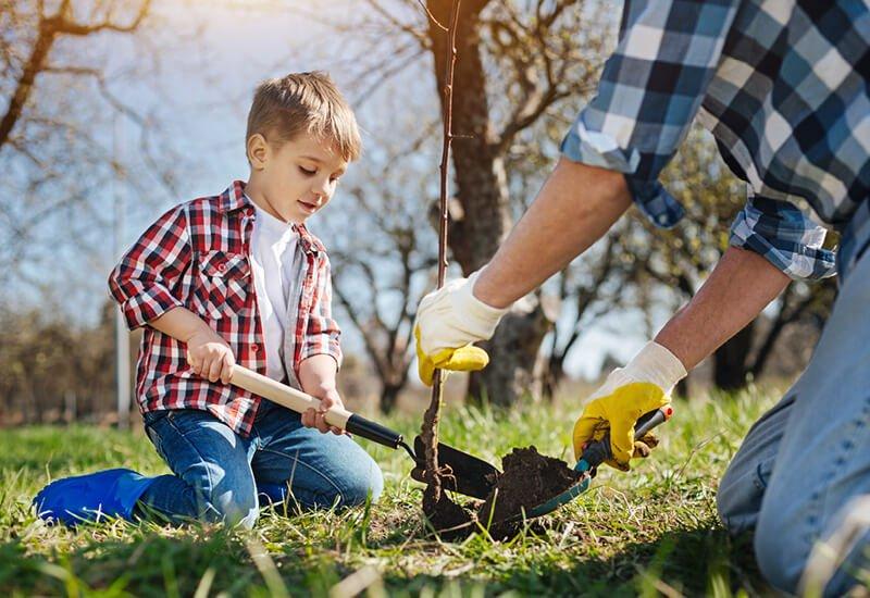 Far og søn planter et træ