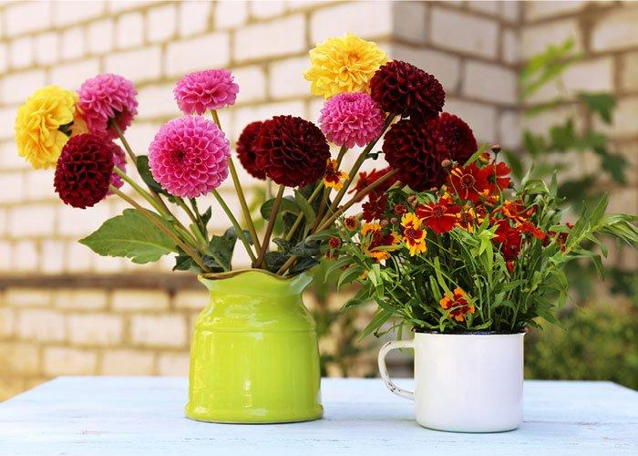 Vase med dahlia blomster