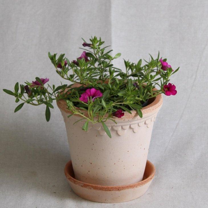 Petunia Million Bells- Calibrachoa - i lilla