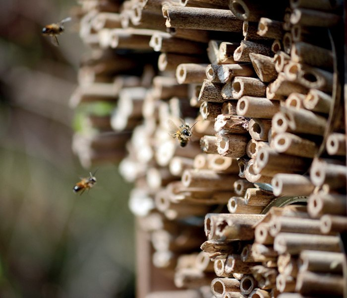 Insekthotel med insekter