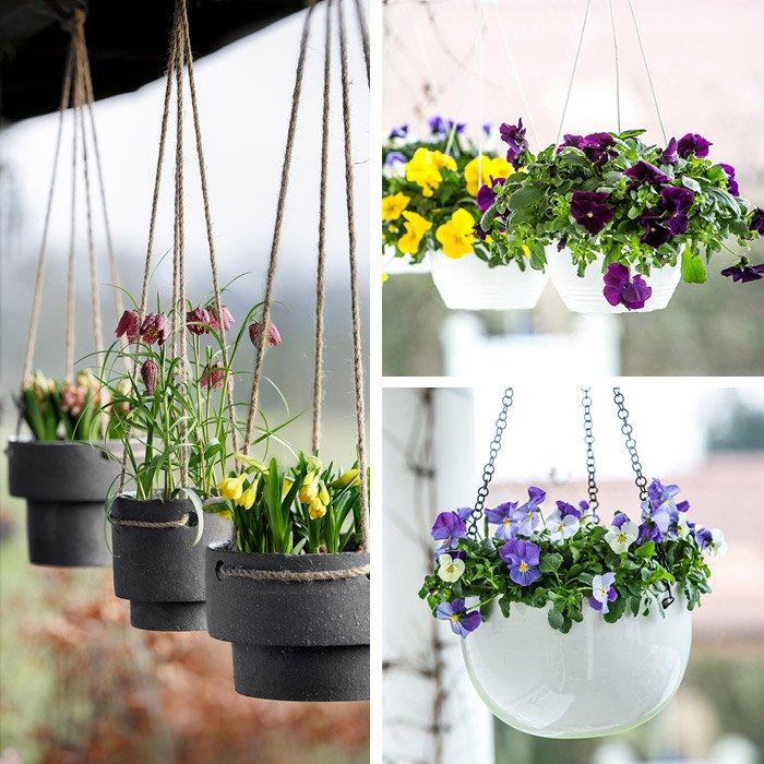 Hængende løgplanter og forårsblomster