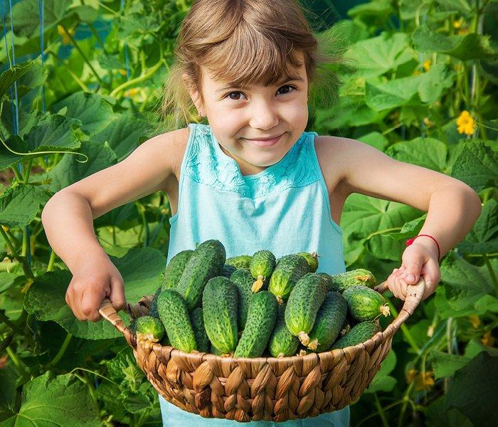 Pige med kurv fuld af nyhøstede agurker