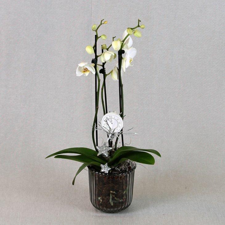 Nytårsdekoreret Orkide dekoration hvid
