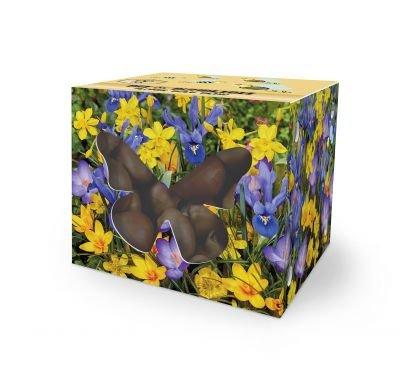 Blomsterløg til bier og sommerfugle Efterårssæsonvarer