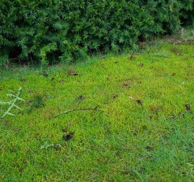 Alge- og mosfjerner